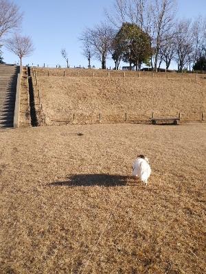万博公園29