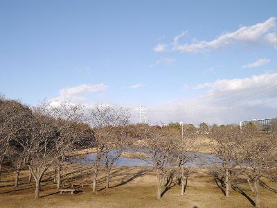 万博公園36