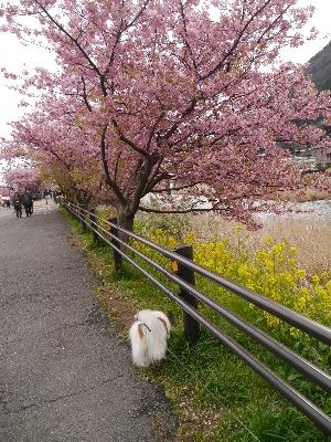 2015伊豆旅行3