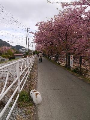 2015伊豆旅行2−9
