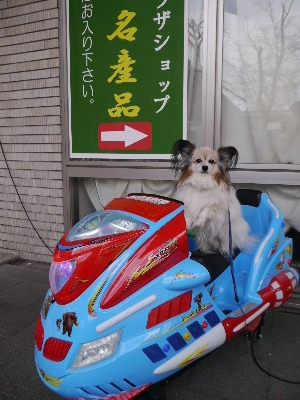2015伊豆旅行5−4