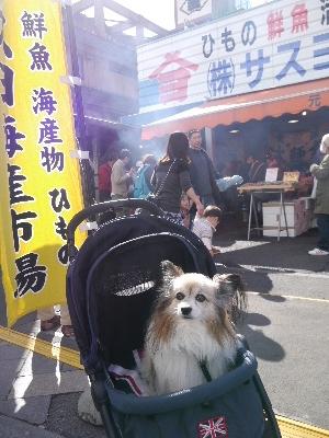 2015伊豆旅行5−10