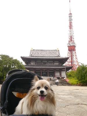 東京タワー11