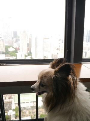東京タワー16