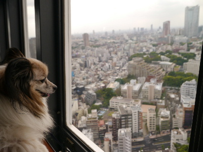 東京タワー21
