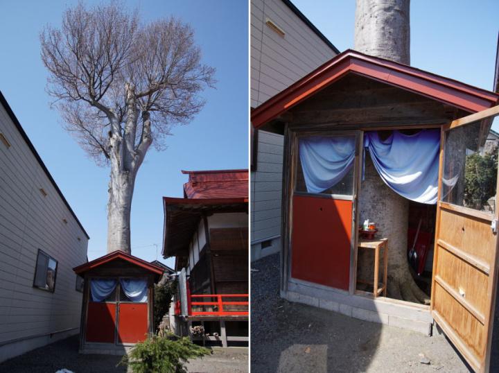 のんびりとじっくりと!境内でひと休み「矢沢正八幡宮ほか」ーつがるみち261