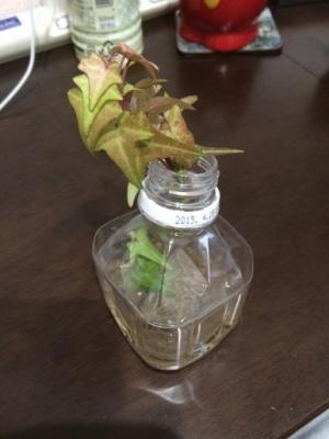 20150324観葉植物