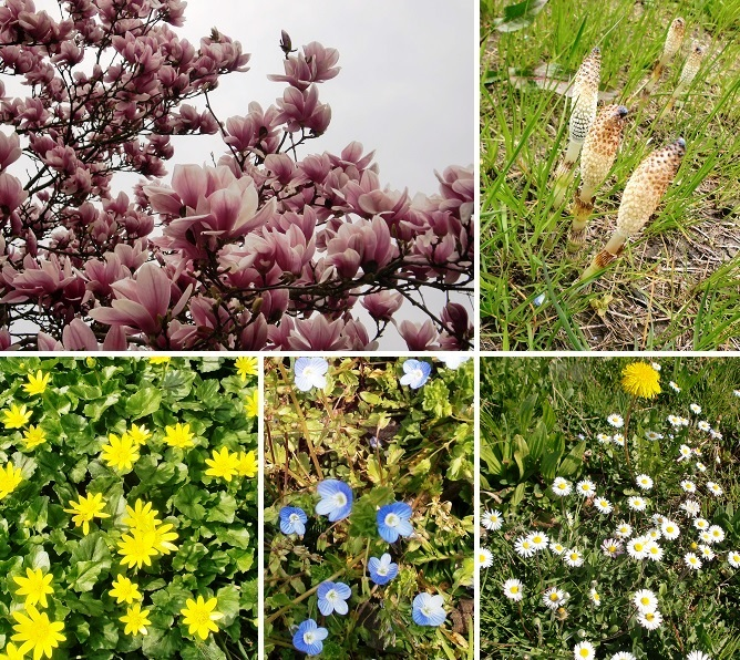 CIMG3673-2015春分の日