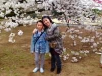2015 cherry brossom