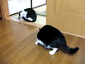 同じ猫でもこの差