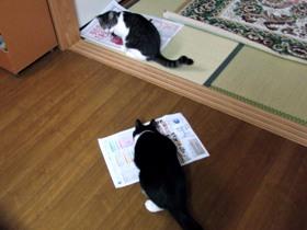 食べながらチラ見する猫