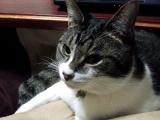 この猫もよくいぬ待つ