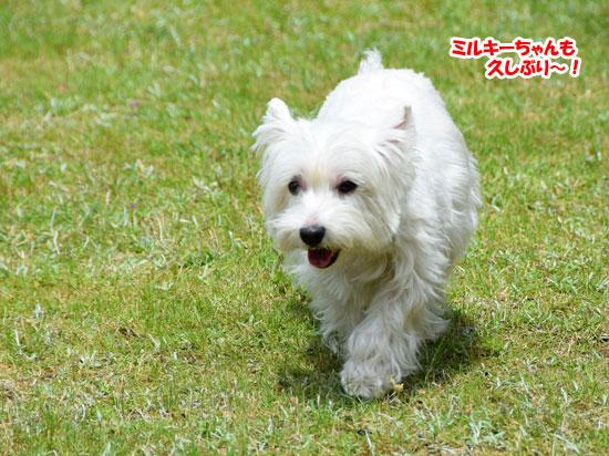 DSC_0018_2015052622351088d.jpg