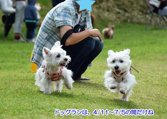 DSC_0071_2015050415494447a.jpg