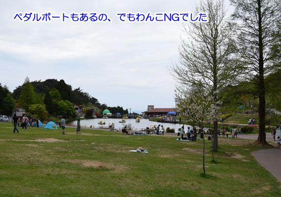 DSC_0132_20150504154949168.jpg