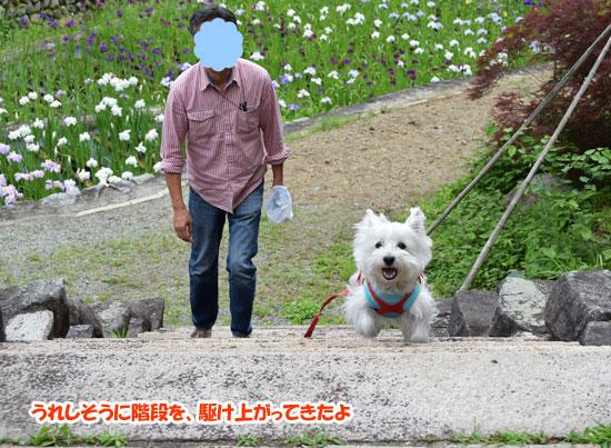 DSC_0210_201506091734018bd.jpg