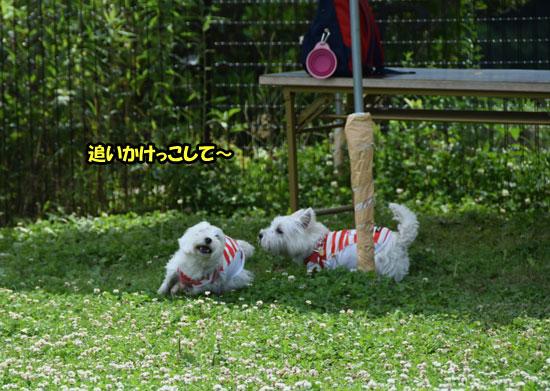 DSC_0400_201506141450105e6.jpg
