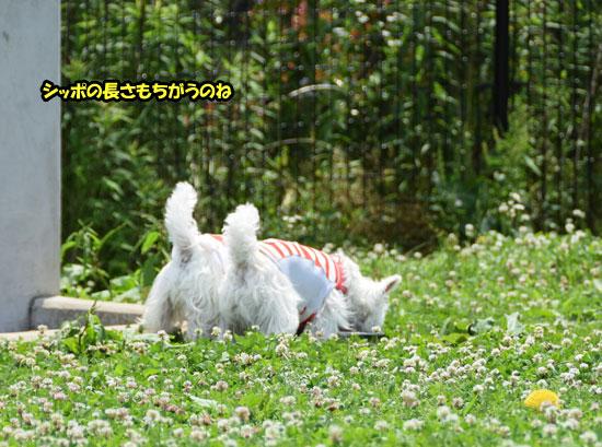 DSC_0418_20150614145119597.jpg