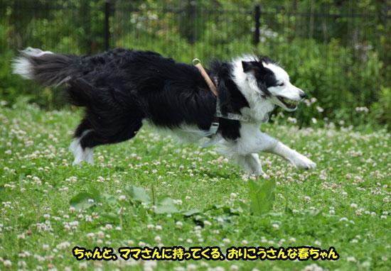 DSC_0511_2015061414553223e.jpg