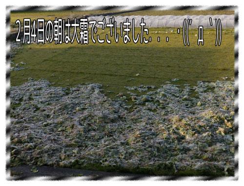 大霜が降りて