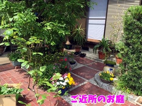 ご近所のお庭