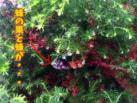 蜂の巣と鉢がブンブン