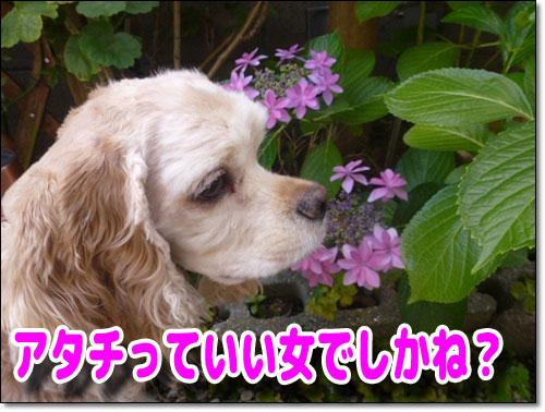 可愛い花でしね