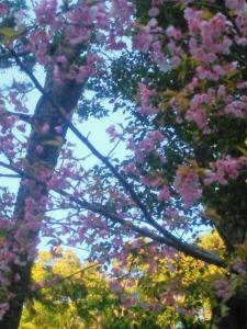 20150326桜
