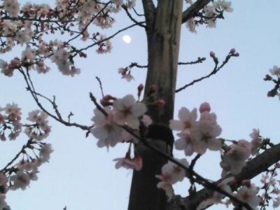 20150330桜と月