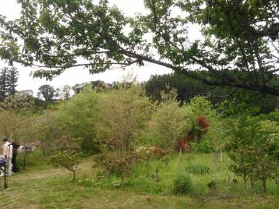 20150429樹木葬