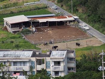 okinawa100.jpg