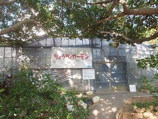 okinawa258.jpg