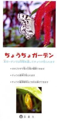 okinawa420.jpg