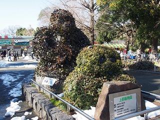 ueno-zoo157.jpg