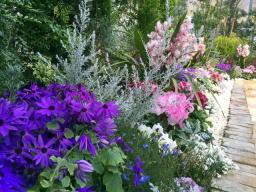 濃い色の花の方が好きだなぁ~