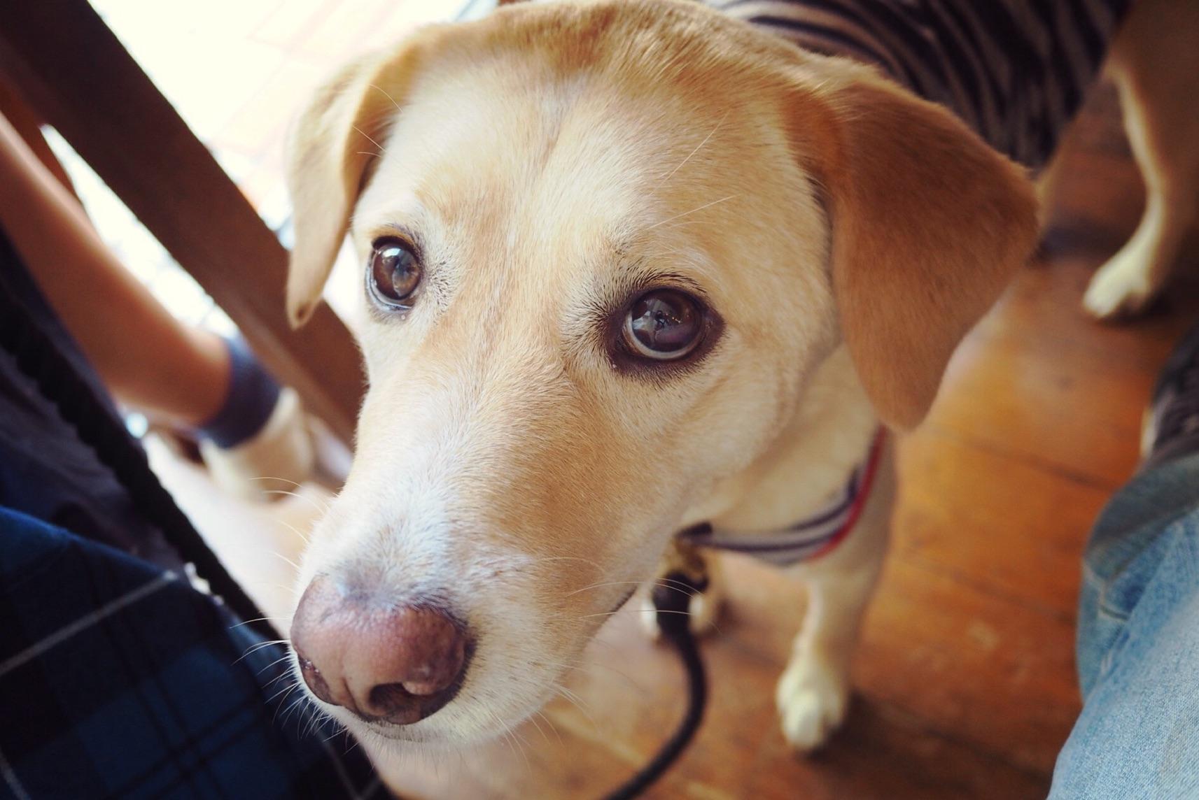 トムスサンドイッチ わんこ 犬