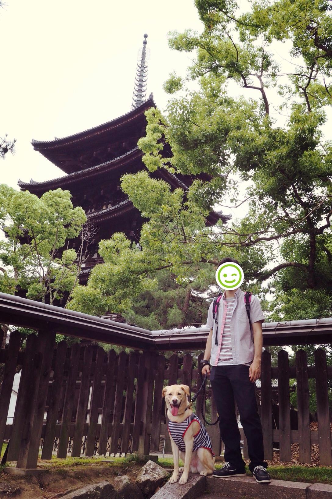 奈良旅行 大型犬 わんこ