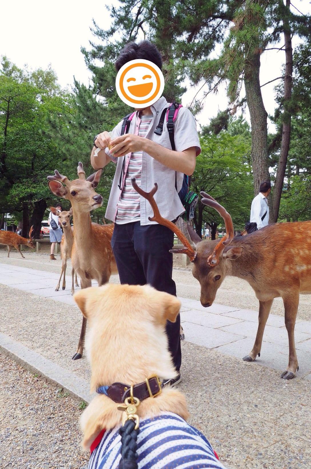 奈良公園の鹿 犬 わんこ