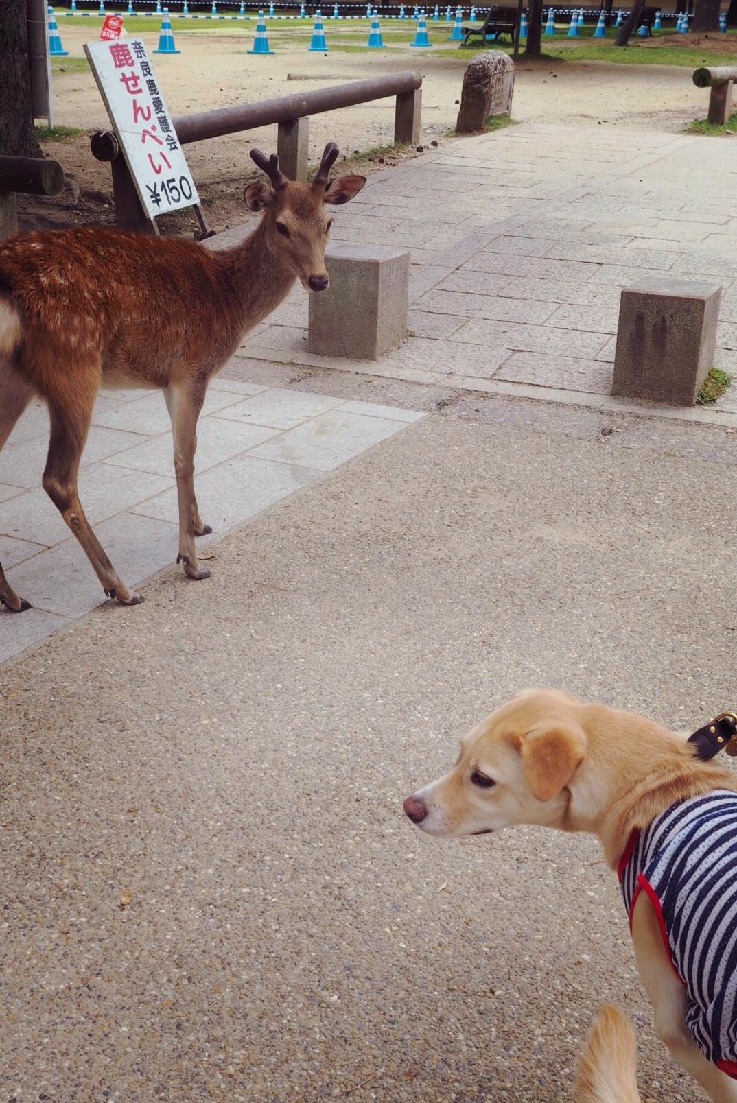 奈良の鹿 犬 わんこ