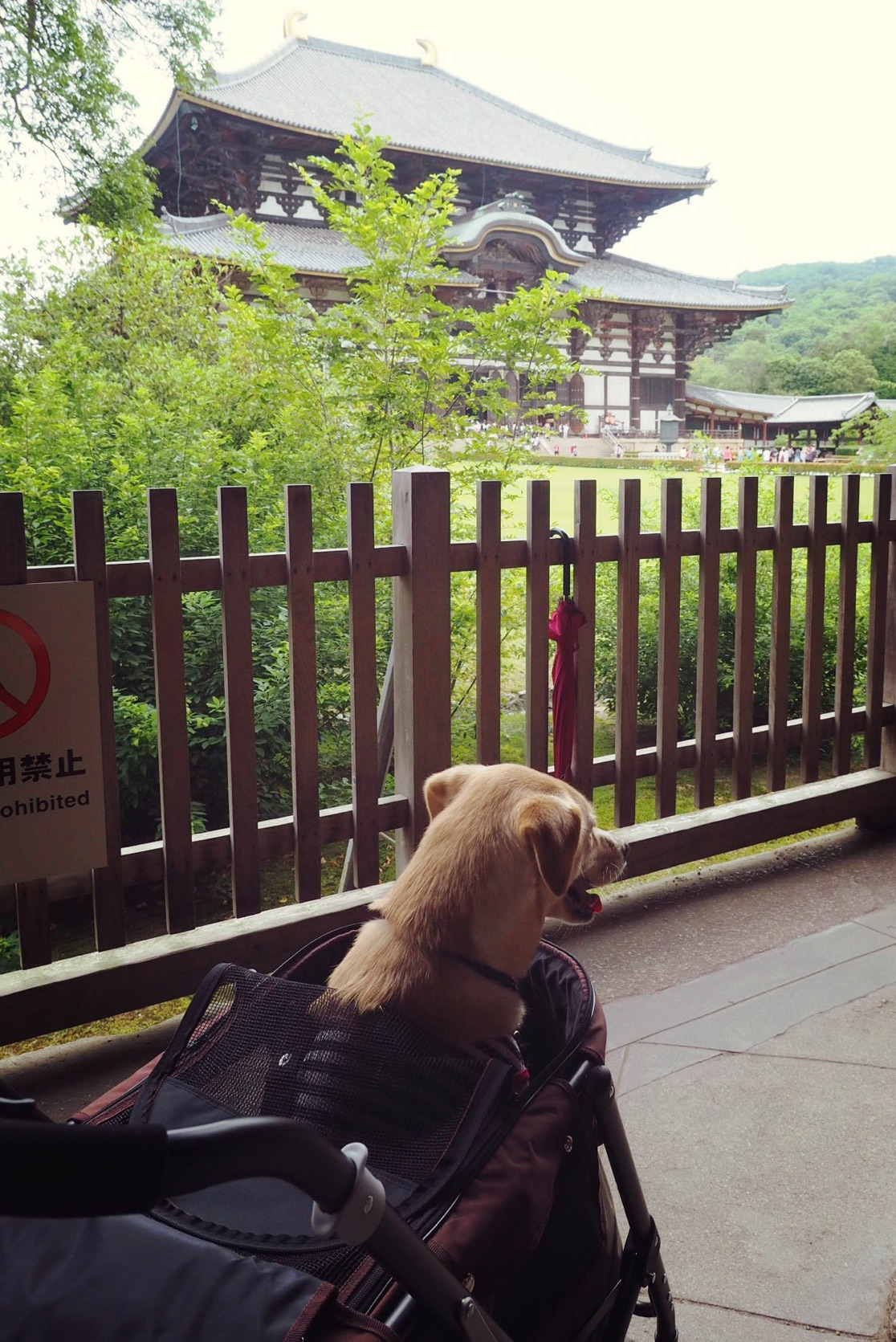 東大寺 大型犬 奈良の大仏