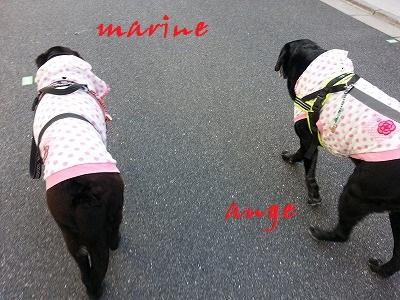 20150402marineange3.jpg