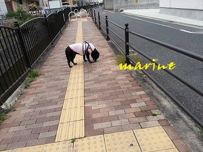20150403marine4.jpg