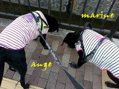 20150427marineange1.jpg