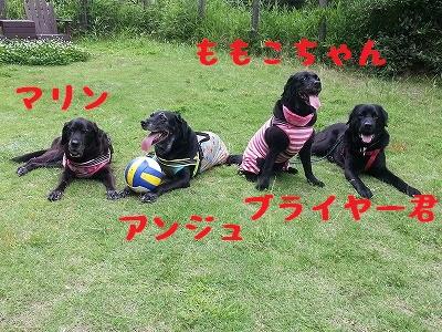 20150613_6.jpg