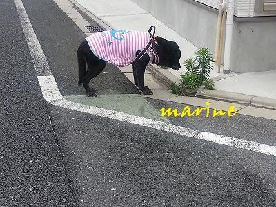 20150617marine2.jpg
