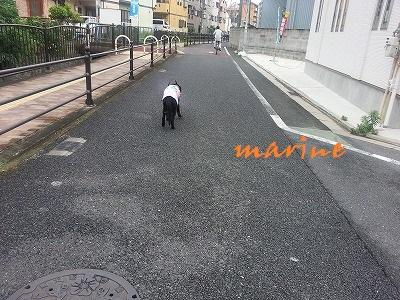20150617marine3.jpg