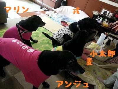 20150620_12.jpg