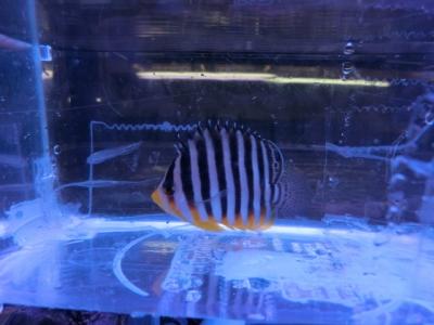 海水魚 684