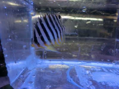 海水魚 685