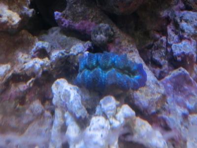 海水魚 691